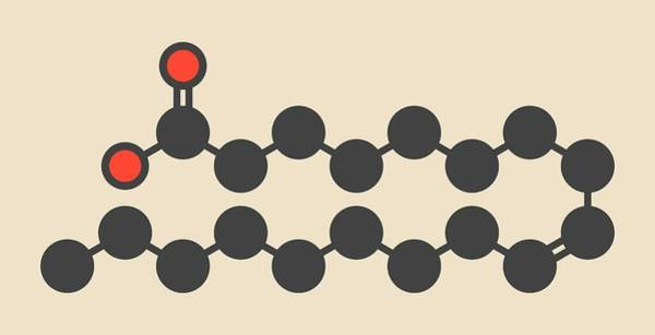 Omega Photograph - Omega-9 Fatty Acid Molecule by Molekuul