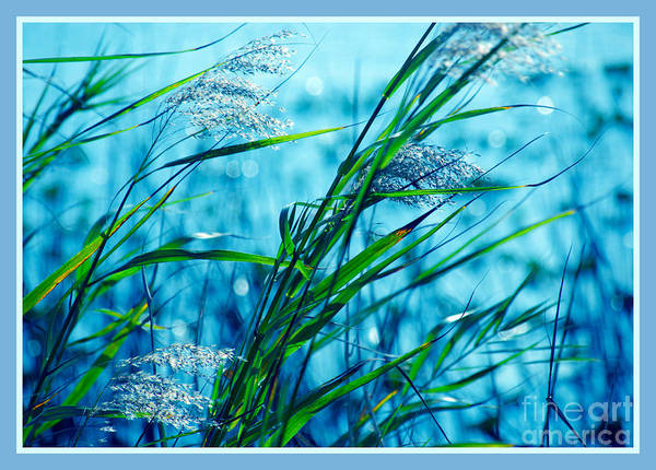 Artful Photograph - On A Blue Afternoon by Susanne Van Hulst