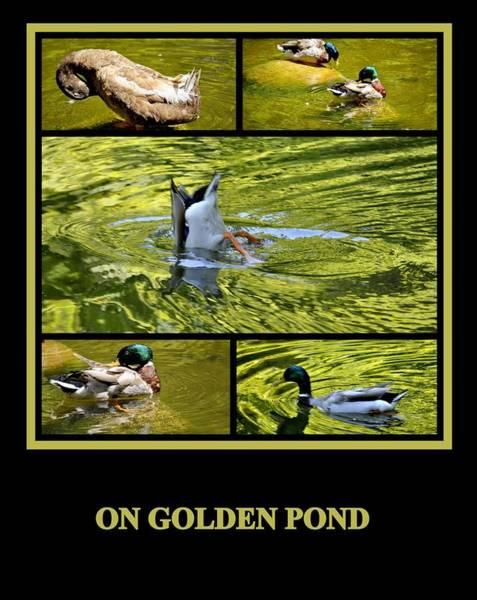 Photograph - On Golden Pond by AJ  Schibig