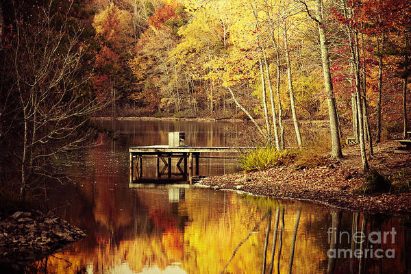 Wall Art - Photograph - On Golden Pond by Katya Horner