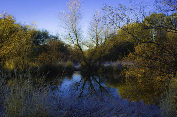 Photograph - On Golden Pond by Sherri Meyer