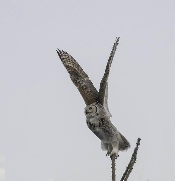 Blye Photograph - On Take-off by Kenneth Blye