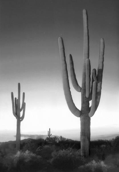 Saguaros Photograph - On The Border by Mike McGlothlen