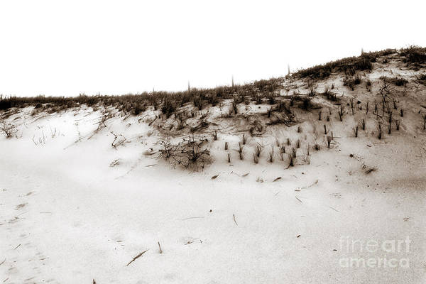 Down The Shore Photograph - On The Dunes by John Rizzuto