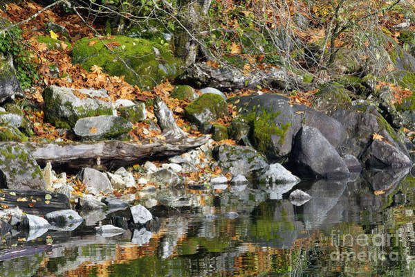 Alouette Wall Art - Photograph - On The Edge Of The Lake by Sharon Talson
