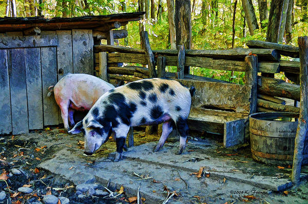 Pigpens Photograph - On The Farm by Kenny Francis