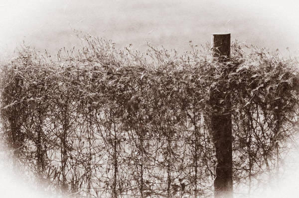 Wall Art - Photograph - On The Fence by Carolyn Marshall