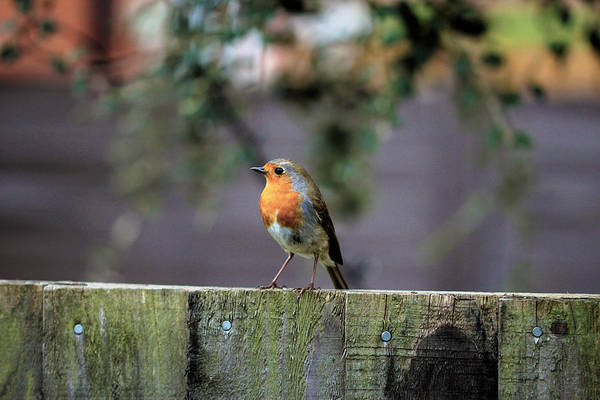 Wall Art - Photograph - On The Fence by Chris Whittle