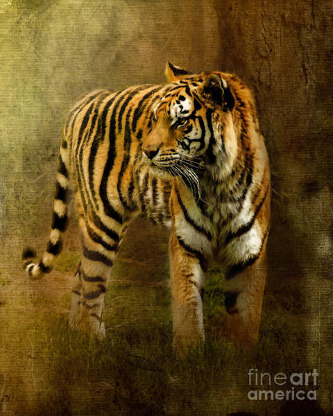 Wall Art - Photograph - On The Hunt by Betty LaRue