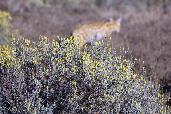 Wall Art - Photograph - On The Hunt by Chris Whittle