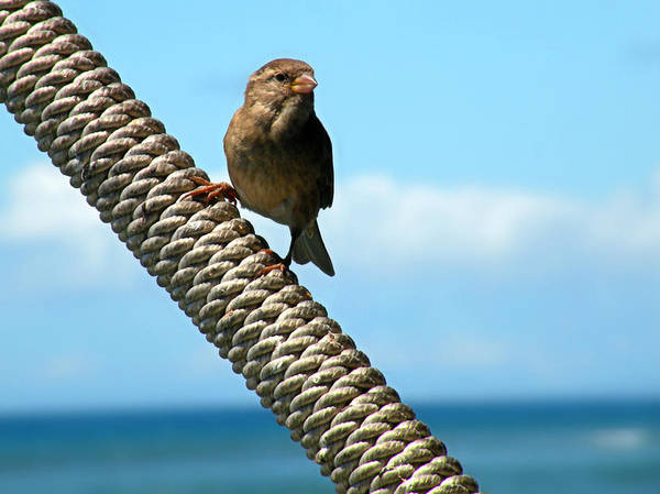 Photograph - On The Lookout by Micki Findlay