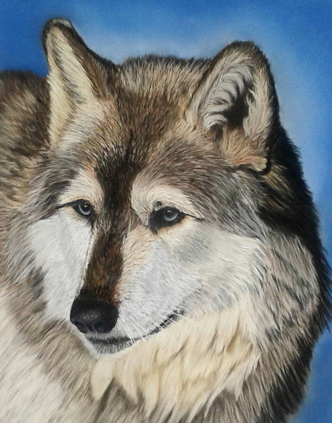 Arctic Wolf Painting - On The Lookout by Sarah Dowson