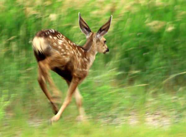 Photograph - On The Move by Shane Bechler