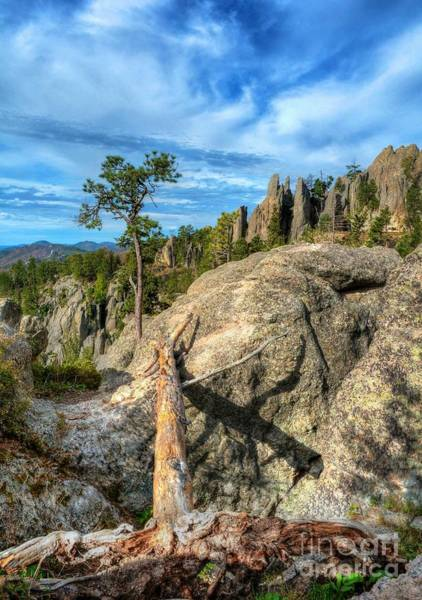 Photograph - On The Needles Highway 2 by Mel Steinhauer