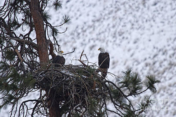 Wall Art - Photograph - On The Nest by Mike  Dawson