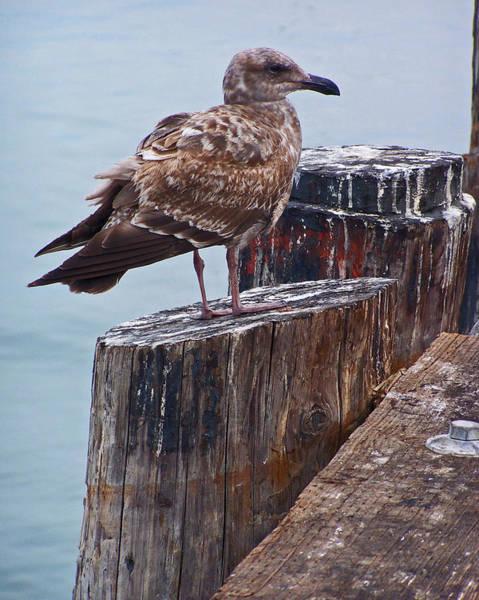Photograph - On The Pier by Jennifer Robin
