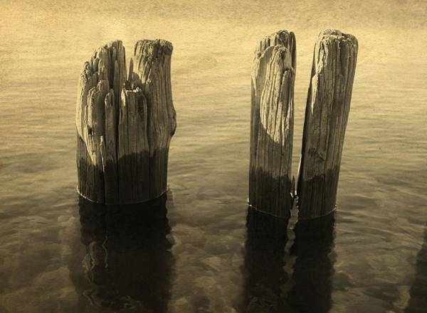 Dock Of The Bay Photograph - Pilings On The Bay by Dan Sproul