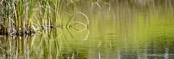 Photograph - On The Pond by Carolyn Marshall