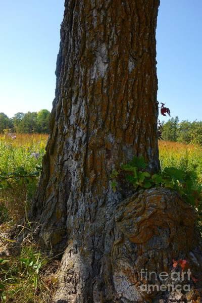 Photograph - On The Prairie #1 by Jacqueline Athmann