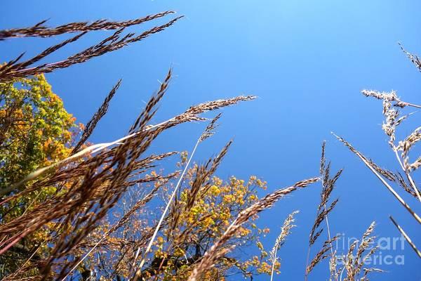 Photograph - On The Prairie #8 by Jacqueline Athmann
