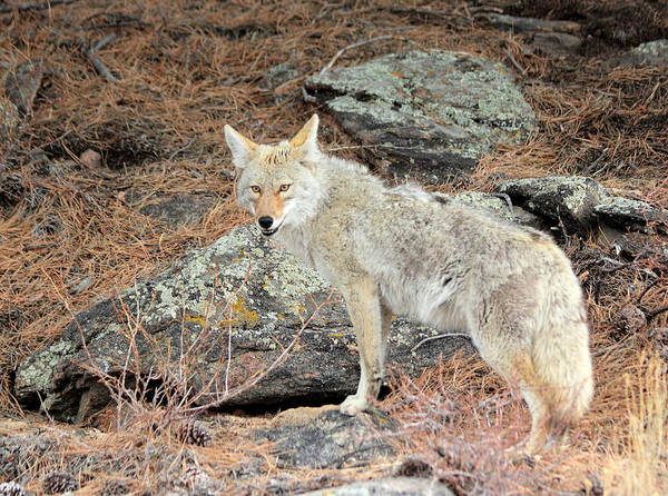 Photograph - On The Prowl by Shane Bechler