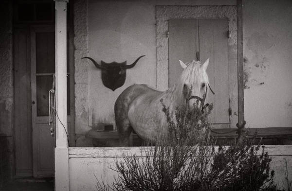 Wall Art - Photograph - On The Ranch by Sue Westwood