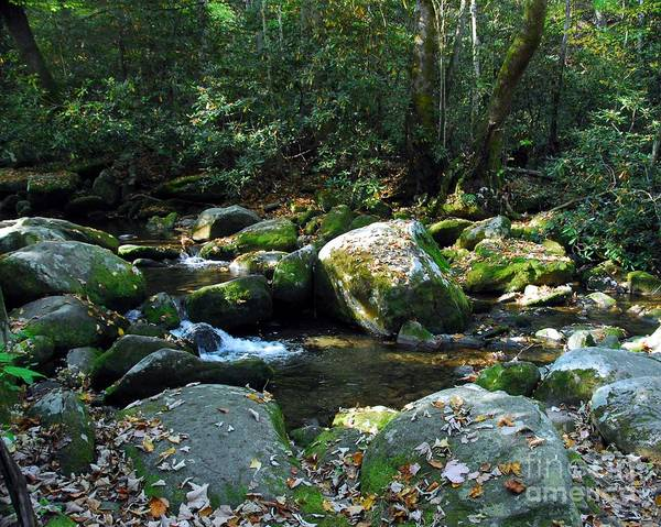 The Great Smoky Mountains Wall Art - Photograph - On The Rocks by Mel Steinhauer