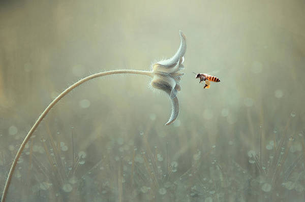 Bee Photograph - On The Way by Edy Pamungkas