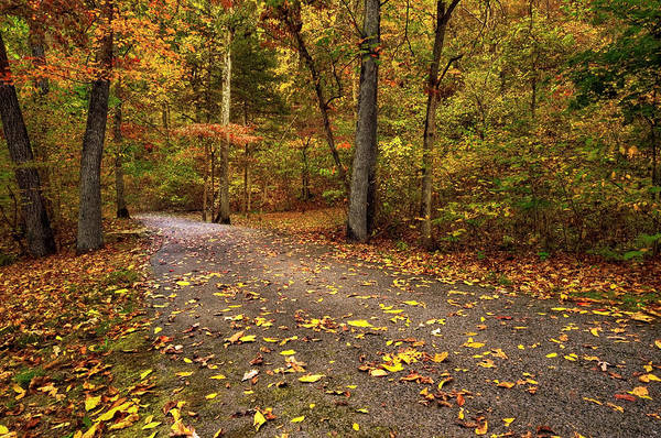 Missouri Ozarks Photograph - On The Way - Autumn Trail by Gregory Ballos