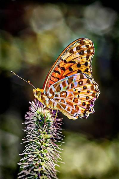 Butterfly On Flower Digital Art - On The Wings Of A Butterfly... by Lilia D