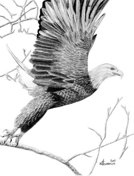 Bald Eagles Drawing - On The Wings Of Eagles by Kayleigh Semeniuk