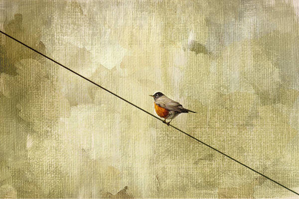 Red Robin Photograph - On The Wire by Rebecca Cozart
