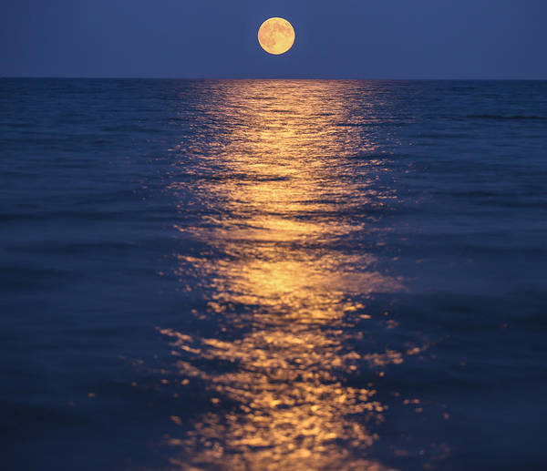 Wall Art - Photograph - Once In A Blue Moon by Anna-Lee Cappaert