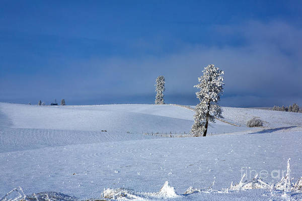 Photograph - Once Upon A Winters Day by Beve Brown-Clark Photography