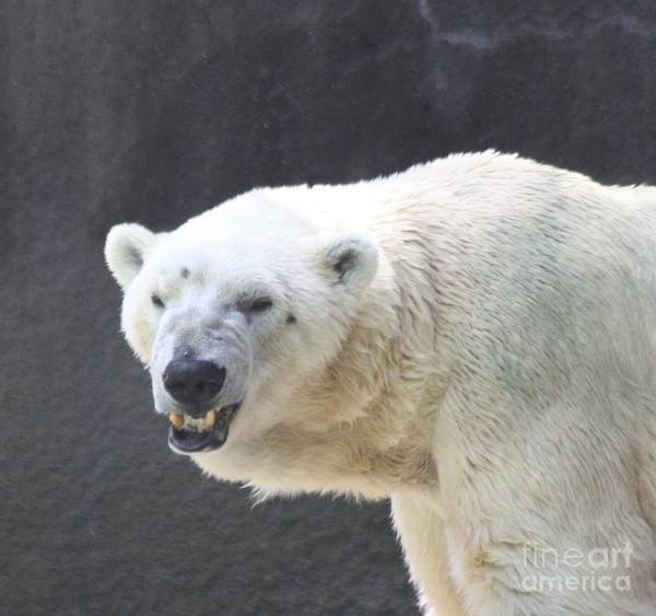 Growling Wall Art - Photograph - One Angry Polar Bear by John Telfer
