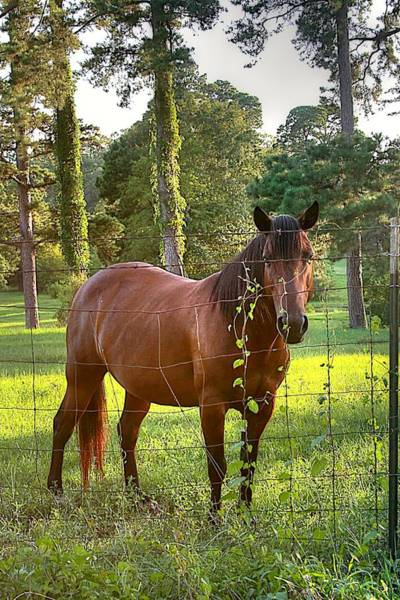 Biota Photograph - One Brown Horse by Ester  Rogers