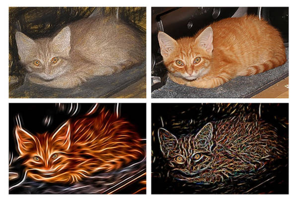 Photograph - One Cat Four Looks by David Yocum