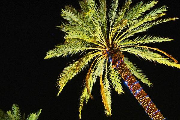 Digital Art - One Christmas Palm by Michael Thomas