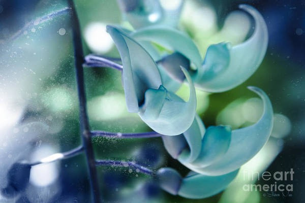 Jade Photograph - One Dream by Sharon Mau