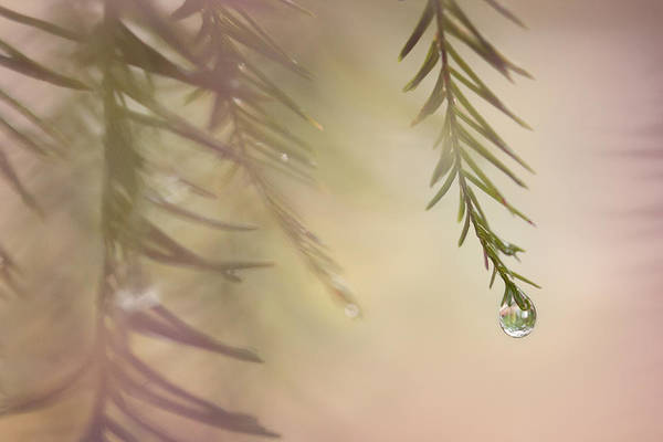 Photograph - One Drop by Maria Robinson