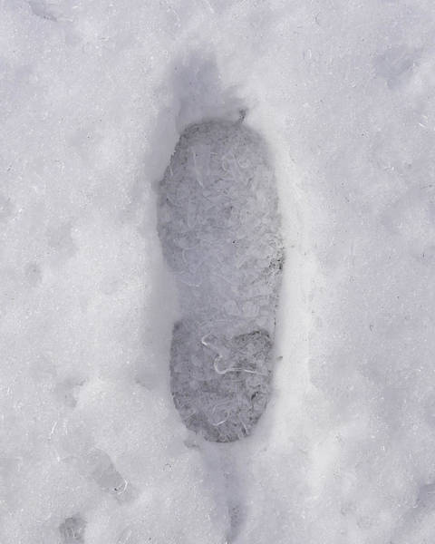 Photograph - One Foot Deep by Richard Reeve
