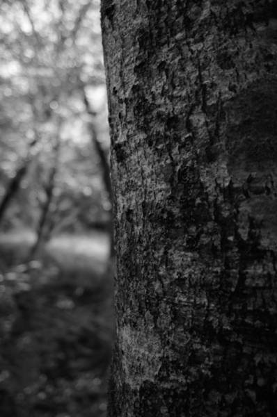 Photograph - One In The Forest by Miguel Winterpacht
