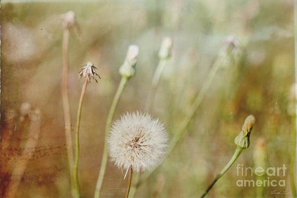 Wall Art - Photograph - One Last Wish by Linda Lees