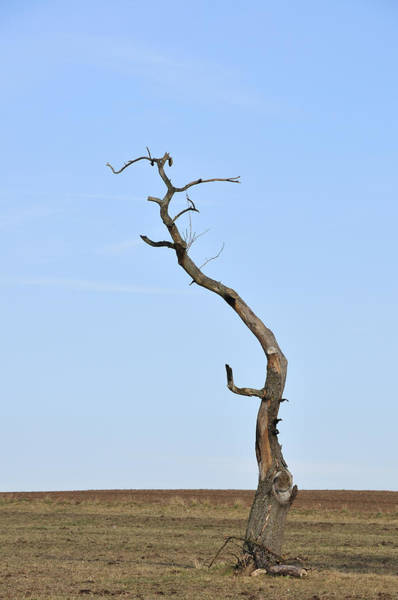 Singly Photograph - One Lonely Tree by Matthias Hauser