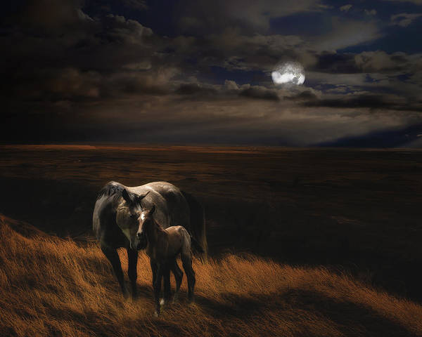 Wall Art - Photograph - One Magic Night by Ron  McGinnis