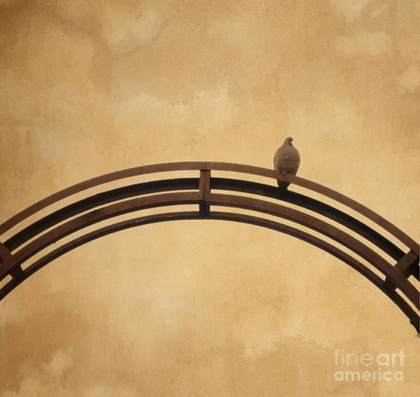 Pigeon Photograph - One Pigeon Perched On A Metallic Arch. by Bernard Jaubert