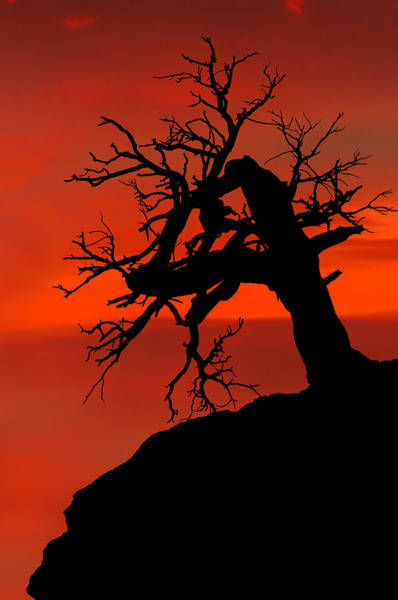 Art Print featuring the photograph One Tree Hill Silhouette by Greg Norrell