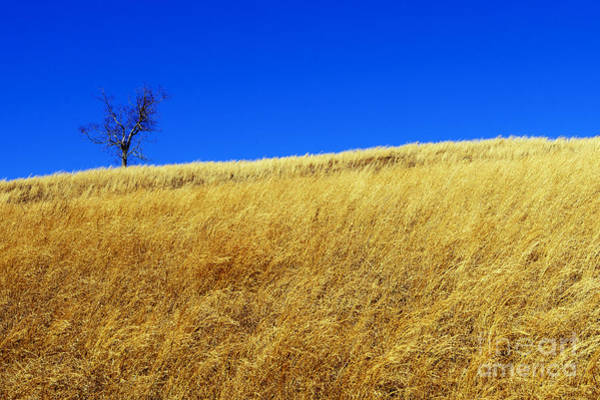 Photograph - One Tree Hill by Thomas R Fletcher