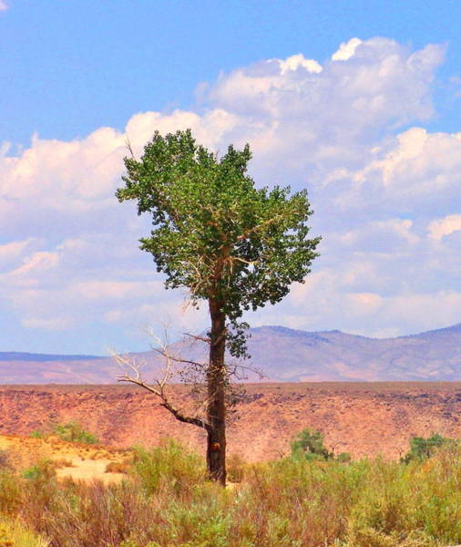 Bishop Hill Photograph - One Tree by Marilyn Diaz