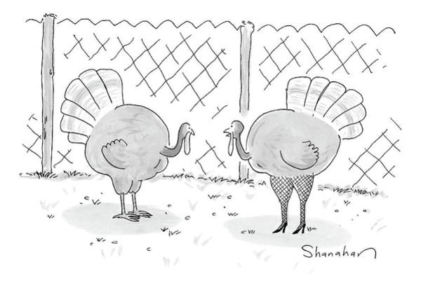 Army Drawing - One Turkey Looks At His Friend by Danny Shanahan
